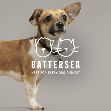 Increasing supporter engagement for Battersea