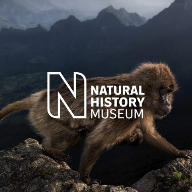 Natural History Museum – Evolve redesign