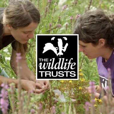 Charity impact video for Avon Wildlife Trust