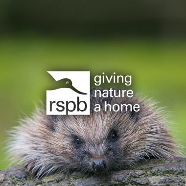 RSPB General Election campaign